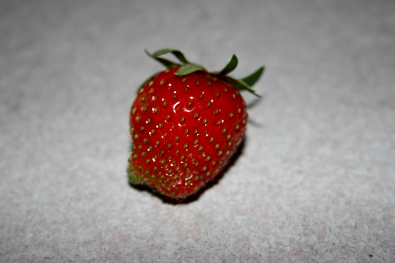 Our first (of many I hope) strawberry of the season.