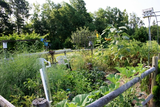 Overview of the garden as of this morning