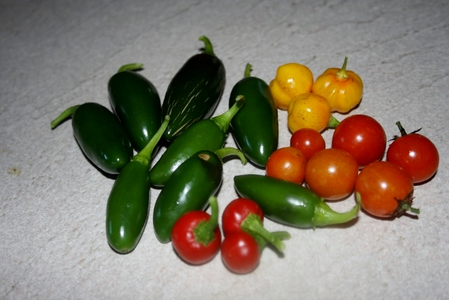Pulled these today - mostly peppers are all that's left producing in the garden right now: Jalapenos, Cherry Tomatoes, Hot Cherry Peppers, Scotch Bonnets