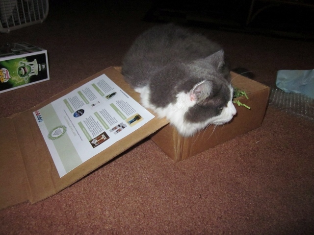 This is my cat's favorite part of me receiving mail - playing in the box.