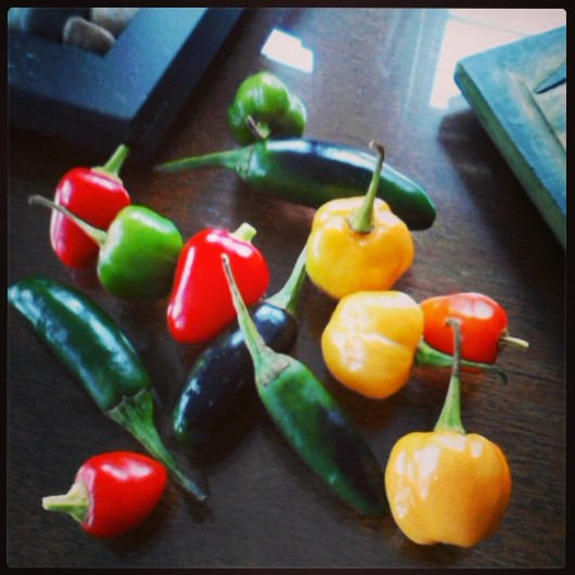One final note: check out these gorgeous peppers that I snagged just before the first frost - jalapenos, scotch bonnet, and hot cherry peppers.
