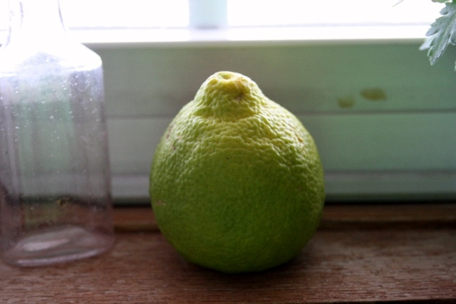 Look at the lovely little lemon I picked from my Sambo lemon tree on Sunday.