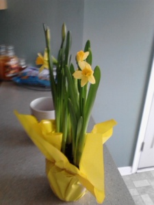 My boyfriend bought flowers for me this weekend. :)