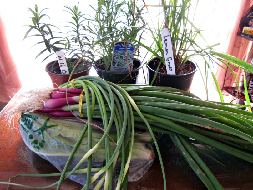 I missed opening day of the outdoor farmer's market last weekend but made sure to go this weekend. I got: a French Lavender, Wild Orange Butterfly Weed, Lemongrass, some garlic scapes (so excited for those!), a mixture of different salad greens, and some spring onions.
