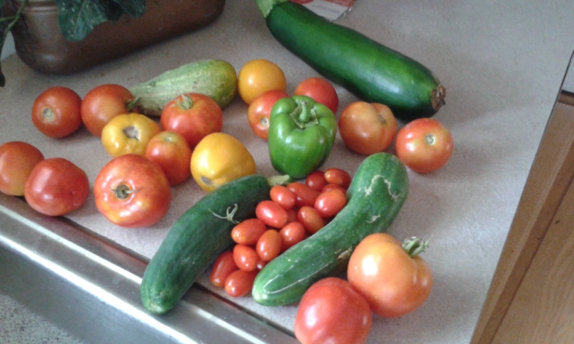 My photo: Harvest from mom's garden (excluding a zucchini from the boyfriend's); what isn't shown is a handful of tomatillos, ground cherries, and some wonder berries.